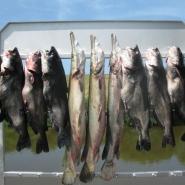 4Bowfish Trip 08-13-10_800x600.jpg